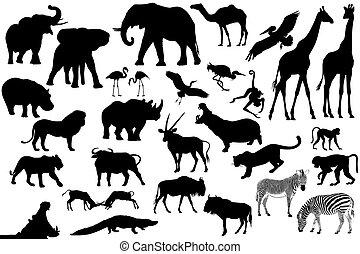 kollektion, av, den, afrikansk, djuren