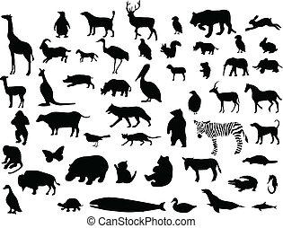 kollektion, av, djur