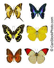 kollektion, av, färgad, fjärilar, isolerat, vita
