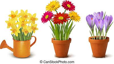 kollektion, av, fjäder, och, sommar, färgrika blomstrar, in, krukor, och, vattning, can., vektor