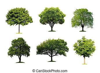 kollektion, av, isolerat, träd