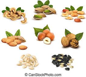 kollektion, av, mogen, nötter, och, frö