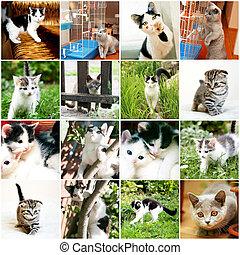 kollektion, av, olik, rolig, kattunge