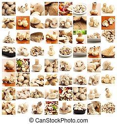 kollektion, av, svamp