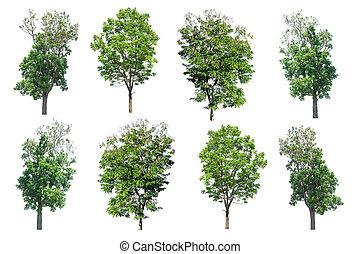 kollektion, av, träd, isolerat, vita, bakgrund