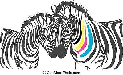 kolor, cmyk, zebra, ilustracja