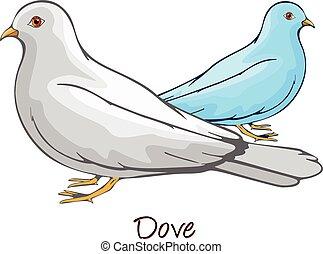 kolor, gołębica, ilustracja
