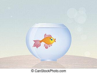 kom, met, goudvis