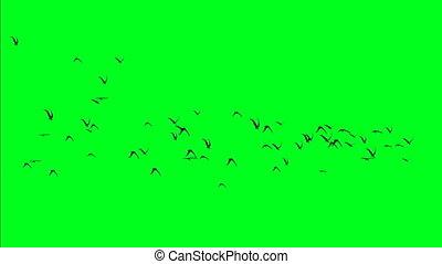 kom van vogels bijeen, op, groene, scherm