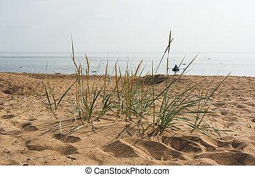 komarovo, finnland, sandstrand, golf