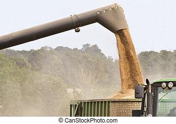 kombinera skördearbetare, korn, offloading
