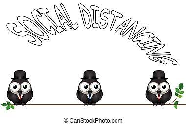 komisch, sociaal, distancing, vogel