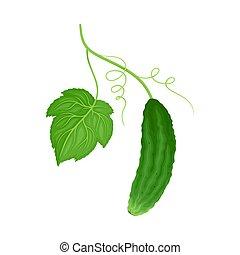 komkommer, blad, groene, vector, artikel, steel