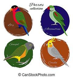 komplet, barwny, papuga, ikona