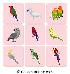 komplet, barwny, papuga, ikony