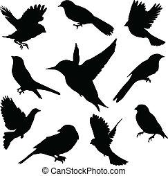 komplet, birds., wektor