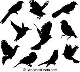 komplet, birds.vector