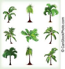 komplet, drzewa., ilustracja, wektor, dłoń, różny