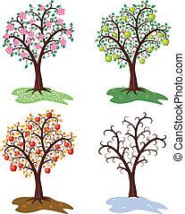 komplet, drzewo jabłka, cztery, wektor, pory