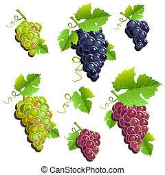 komplet, grona, winogrona