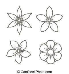 komplet, ikony, jaśmin, tło., wektor, kwiat, biały