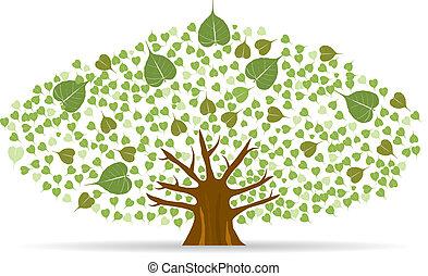 komplet, illustration., drzewo, bodhi, fig), wektor, (sacred