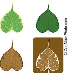komplet, liść, illustration., bodhi, fig), wektor, (sacred
