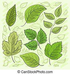 komplet, liście, hand-drawn, wektor, zielony, twój, design.