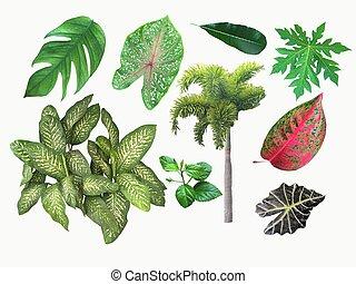 komplet, liście, odizolowany, zbiór, tropikalny, tło., biały, plants.