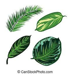 komplet, liście, zbiór, izolować, tropikalny, vector.