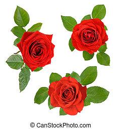 komplet, listowie trójca, róże, otwarty, czerwony