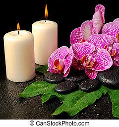 komplet, obnażony, fiołek, (phalaenopsis, rozkwiecony, zdrój, gałązka, storczyk