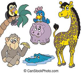 komplet, od, afrykanin, zwierzęta 2
