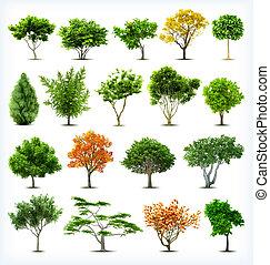 komplet, od, drzewa, isolated., wektor