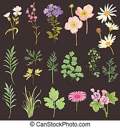 komplet, od, kwiaty, i, zioła, -, ręka, pociągnięty, akwarela, styl, -, w, wektor