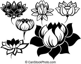 komplet, od, lotosy
