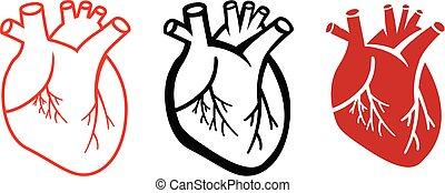 komplet, od, ludzkie serce, ikony, w, linearny, styl, wektor