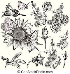 komplet, od, wektor, ręka, pociągnięty, flowers.eps