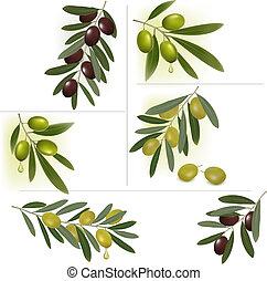 komplet, olives., tła, wektor, zielony, czarnoskóry,...
