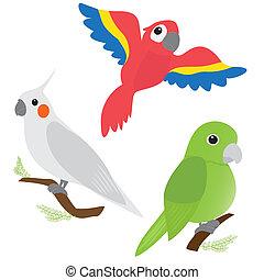 komplet, papugi, rysunek