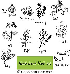 komplet, ręka, zioła, wektor, tło, pociągnięty, przyprawy