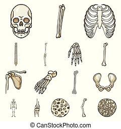 komplet, szkielet, poznaczcie., web., ilustracja, wektor, ludzki, symbol, kość, pień
