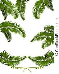 komplet, tła, leaves., ilustracja, wektor, dłoń