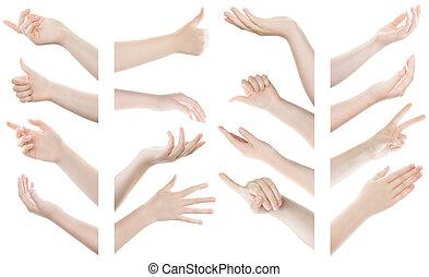 komplet, tło, odizolowany, ręka, gesty, samica, biały