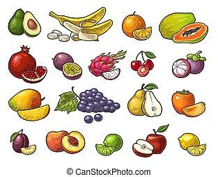 komplet, tropikalny, fruits., wektor, czarnoskóry, rocznik wina, rytownictwo, odizolowany, na białym