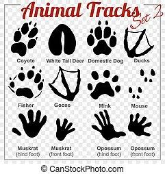 komplet, zwierzęta, ślady, wektor, -