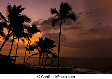 Kona sunset Big Island Hawaii - Kona sunset against palm...