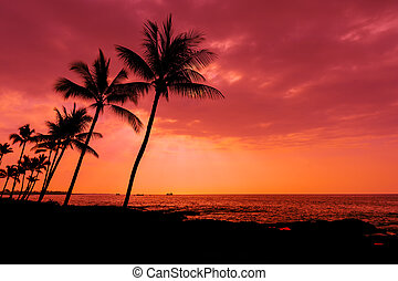 Kona sunset palm trees Big Island Hawaii