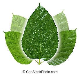 konceptualny, liście, zielony