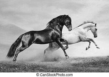 konie, pasaż
